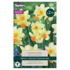 Narcissus Eaton Song  - Taylor's Bulbs