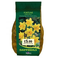 Narcissi Fortune 8Kg - Taylor's Bulbs