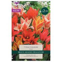 Tulip Fun Colours  - Taylor's Bulbs