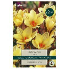 Crocus Gipsy Girl  - Taylor's Bulbs