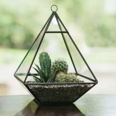Glass Pyramid Terrarium - Crest
