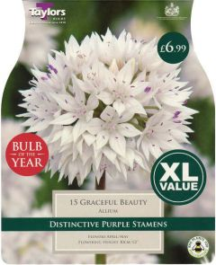 Allium Graceful Beauty 15 Pack - Bulb of the Year - Taylor's Bulbs