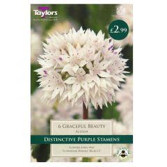 Allium Graceful Beauty 6 Pack - Taylor's Bulbs