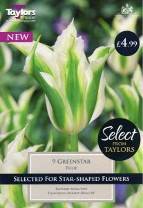 Tulip Greenstar Selection 11-12 - Taylors Bulbs