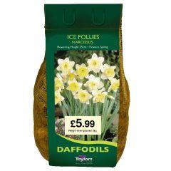Narcissi Ice Follies 7Kg - Taylor's Bulbs