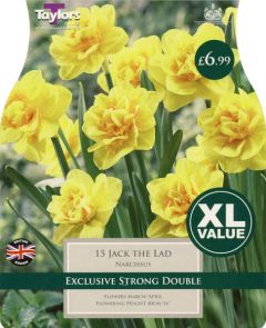 Narcissi Jack The Lad XL Value - Taylors Bulbs