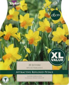 Narcissis Jetfire 20 Pack - Taylors Bulbs