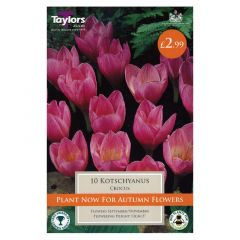 Crocus Kotschyanus 8 Pack - GC-TAYLORS