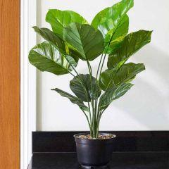 Leopard Lily 70 cm - Smart Garden
