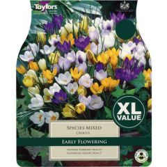 Crocus Mixed Species 50 Pack