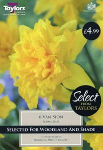 Narcissi Van Sion 6 Pack - Taylor's Bulbs