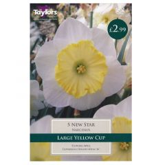 Narcissus New Star - Taylor's Bulbs