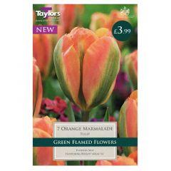 Tulip Orange Marmalade  - Taylor's Bulbs