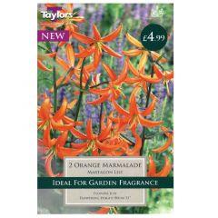 Lily Orange Marmalade  - Taylor's Bulbs