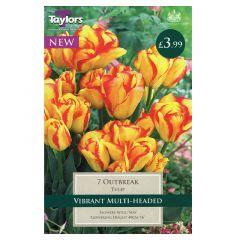 Tulip Outbreak  - Taylor's Bulbs