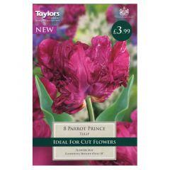 Tulip Parrot Prince  - Taylor's Bulbs