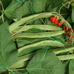 Pea & Bean Netting - Green - 5m x 2m - Smart Garden