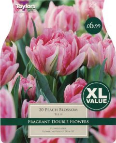 Tulip Peach Blossom 20 Pack - Taylors Bulbs