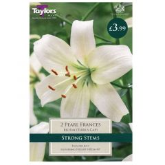 Lily Pearl Frances  - Taylor's Bulbs