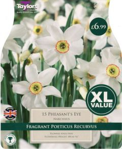 Narcissus Pheasants Eye 15 Pack - Taylors Bulbs