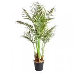 Phoenix Palm 124 cm - Smart Garden