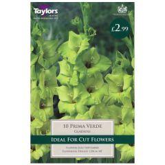 Gladioli Prima Verde 10 Pack - Taylors Bulbs