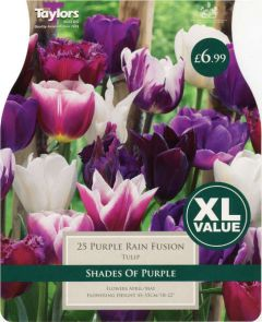 Tulip Purple Rain Fusion 25 Pack - Taylors Bulbs