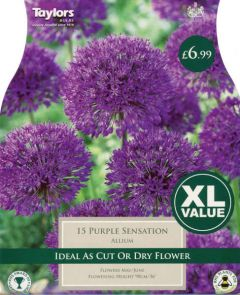 Allium Purple Sensation XL Value - Taylors Bulbs