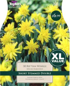 Narcissus Rip Van Winkle XL Value (30 Pack) - Taylors Bulbs