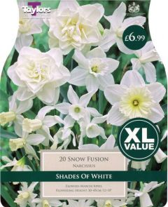 Narcissi Snow Fusion 20 Pack - Taylors Bulbs