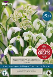 Snowdrop Collection 30 Pack - Taylor's Bulbs