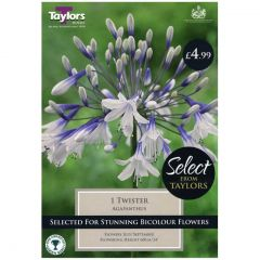Agapanthus Twister 1 Pack - Taylors Bulbs
