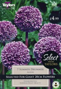 Allium Summer Drummer 1 Pack - Taylor's Bulbs