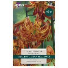 Lily Sunny Morning  - Taylor's Bulbs