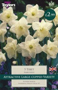 Narcissi Tibet 5 Pack - Taylors Bulbs