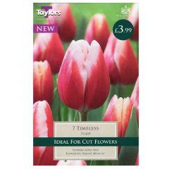 Tulip Timeless  - Taylor's Bulbs