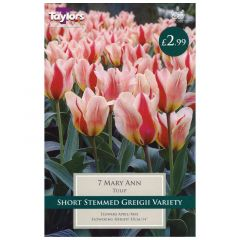 Tulip Mary Ann 7 Pack - GC-TAYLORS