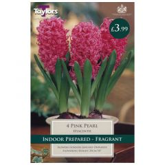 Indoor Hyacinth Pink Pearl 3pk - GC-TAYLORS