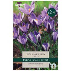 Crocus Spring Beauty  - Taylor's Bulbs