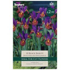 Iris Black Beauty 15 Pack - GC-TAYLORS