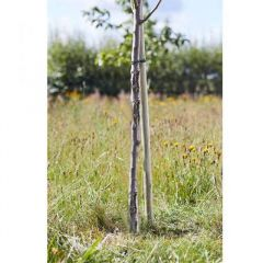Tree Stakes - Softwood Round 210 cm - Smart Garden