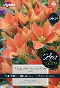 Tulip Batalinii Salmon Gem 7 Pack - Taylors Bulbs