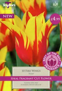 Tulip Fire Wings 10 Pack - Taylors Bulbs