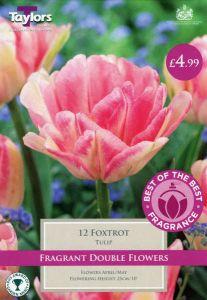 Tulip Foxtrot 12 Pack - Taylors Bulbs
