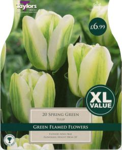 Tulip Spring Green 20 Pack - Taylors Bulbs