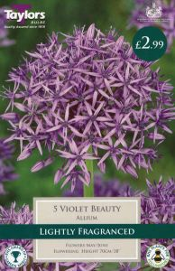 Allium Violet Beauty 5 Pack - Taylors Bulbs