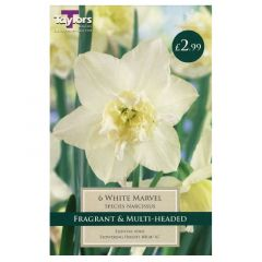 Narcissus White Marvel - Taylor's Bulbs