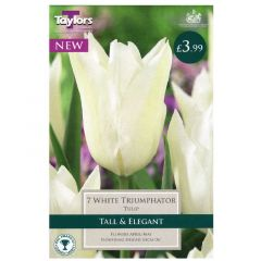 Tulip White Triumphator  - Taylor's Bulbs