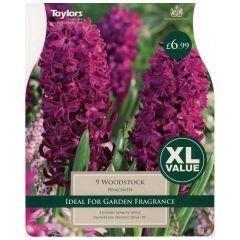 Hyacinth Woodstock 9 Pack - GC-TAYLORS