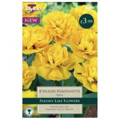 Tulip Yellow Pomponette  - Taylor's Bulbs